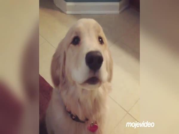 Prosím, dej mi už ten míček!