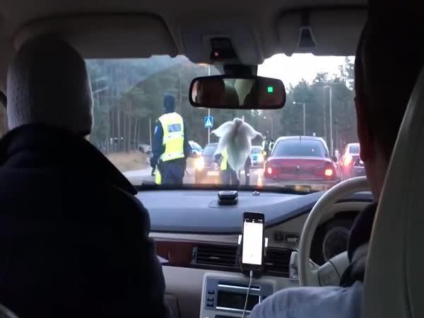 Když se policajtka splete