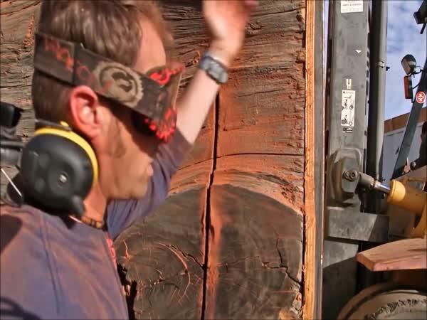 Motorová pila a 2 400 let starý kmen