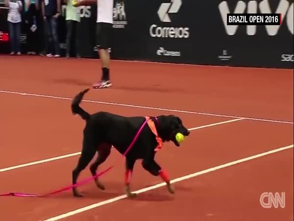 Pomocník pro tenisty