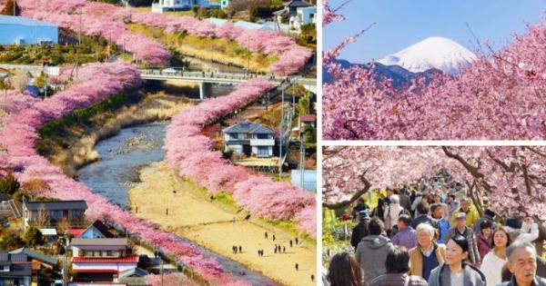 GALERIE - Rozkvétající Japonsko