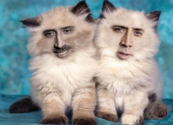 GALERIE - Nicolas Cage jako kočka 1