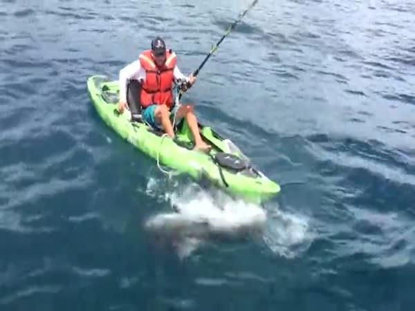 Chytání žraloka z kajaku