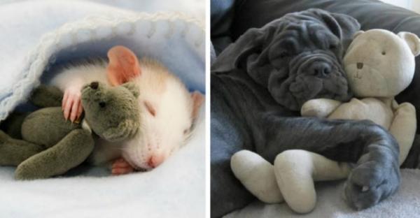 GALERIE - I zvířata mají své mazlíčky