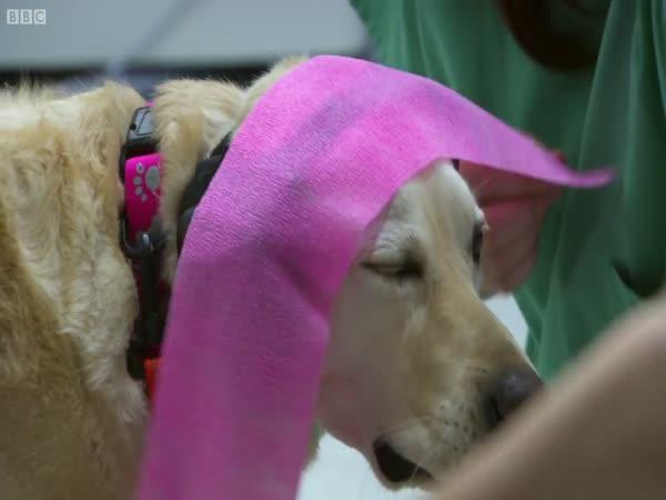 Psi uvnitř magnetické rezonance