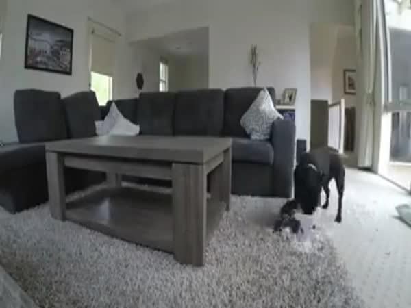 Co dělá pes, když jsi v práci