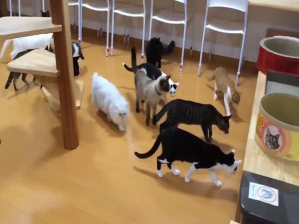 Dvanáct koček a robotický vysavač