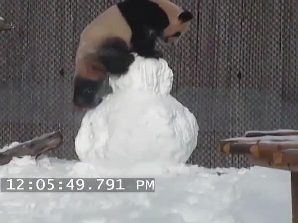 Panda si hraje se sněhulákem