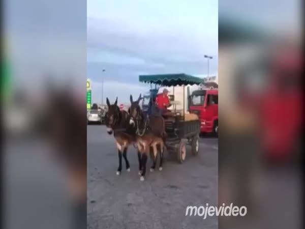 Parkování oslů