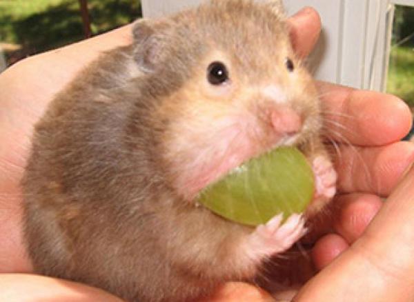 GALERIE - Zvířata které milují jídlo