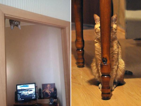 GALERIE - Kočičí špióni