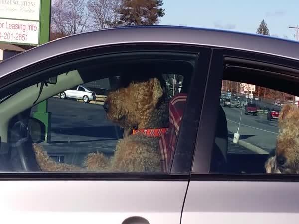 Netrpělivý pes čeká na páníčka