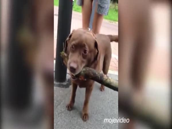 Ta větev je moje