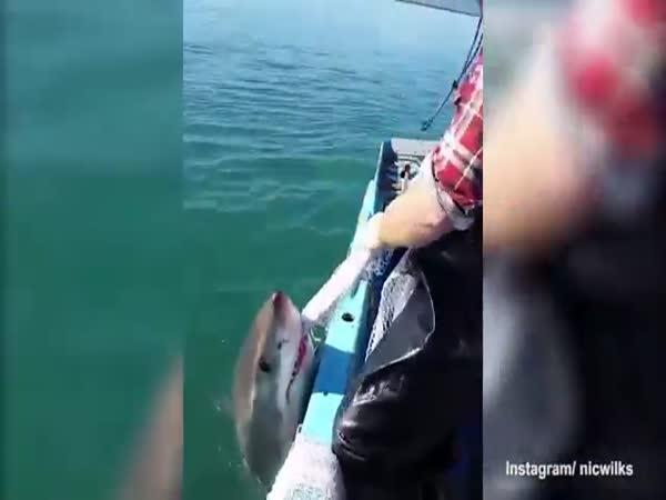 Rvačka se žralokem