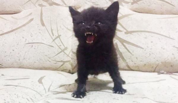 GALERIE - Nejnaštvanější kočičí výrazy