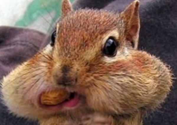 GALERIE - Zvířata, která milují jídlo 2