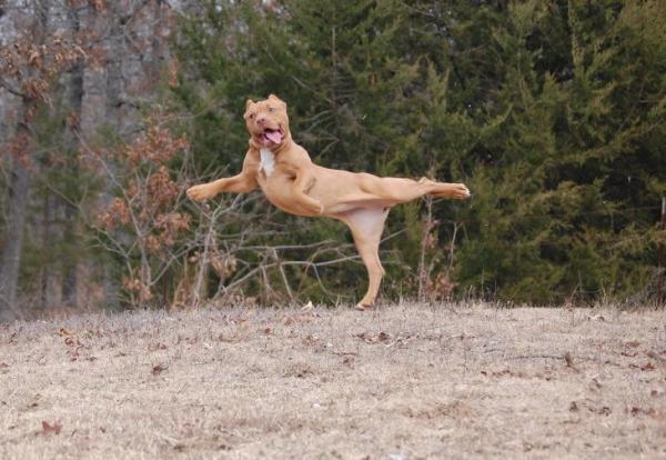 GALERIE - Legrační momentky psů