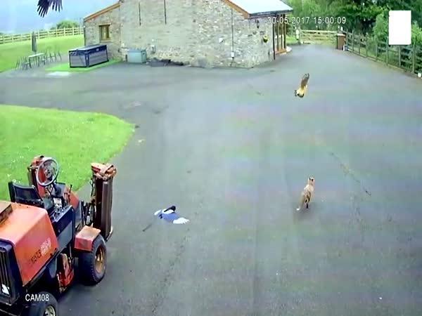 Liška, slepice, vrány a mladík