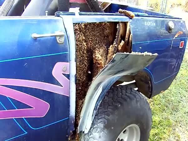 Když se vosám zalíbí vaše auto