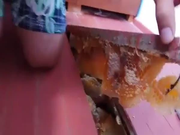Rusko – Domácí med