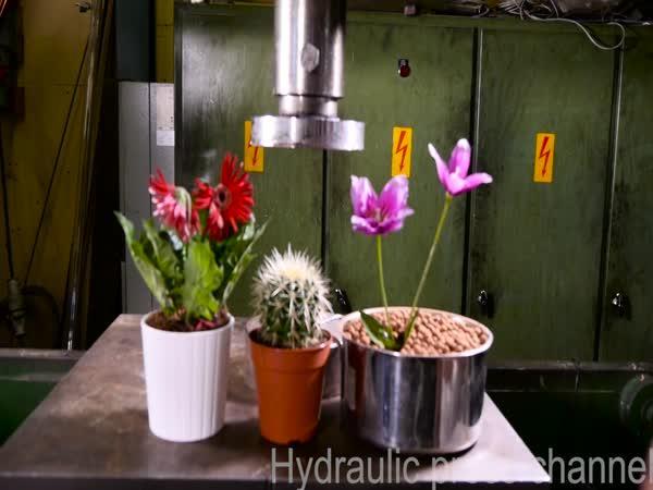 Hydraulický lis vs květiny