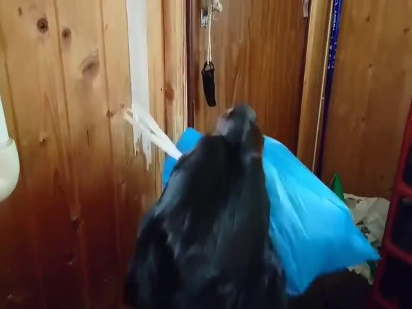 Haf, mám vynést odpadky?