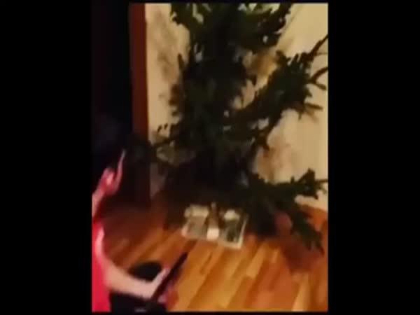 Jak se pozná uschlý vánoční stromek