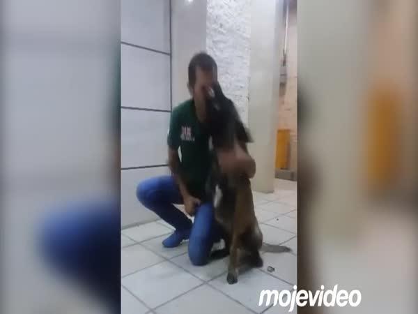 Když psovi přeskočí