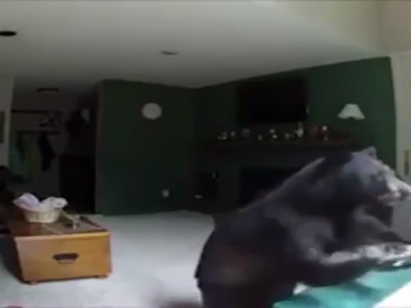 Medvěd se vloupal do domu