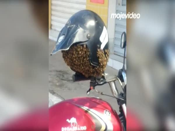 Roj včel v helmě