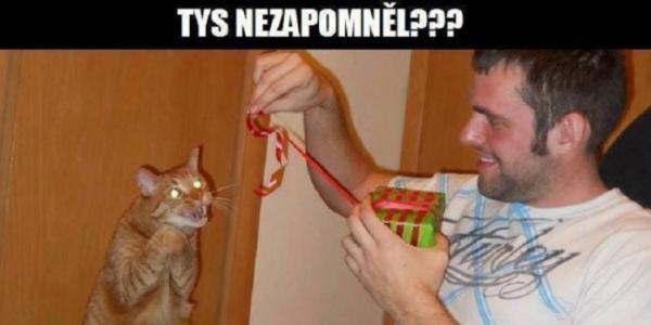 GALERIE - Kočičí meme