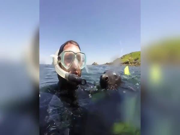 Šnorchlování s tuleni
