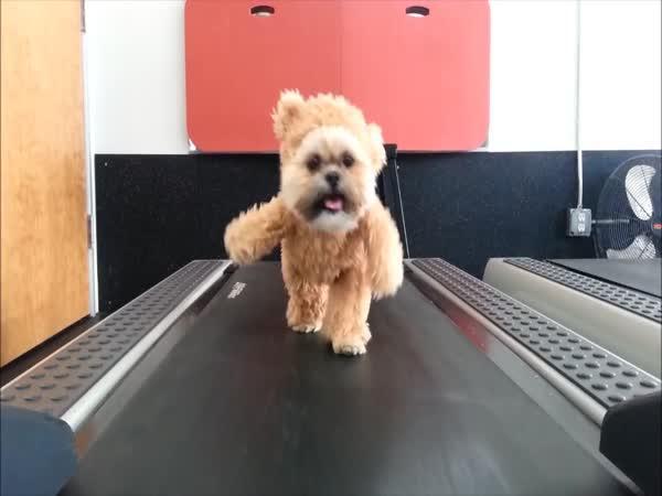 Pes převlečený za medvídka Tedyho
