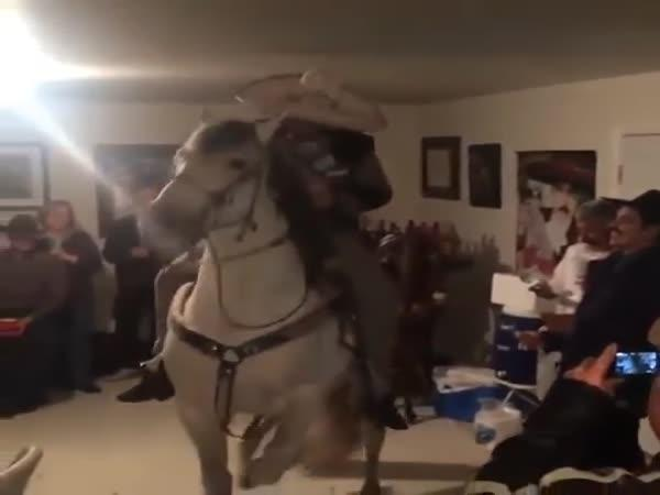 Kůň na narozeninové oslavě
