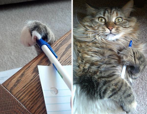GALERIE - Kočičí zlodějíčci