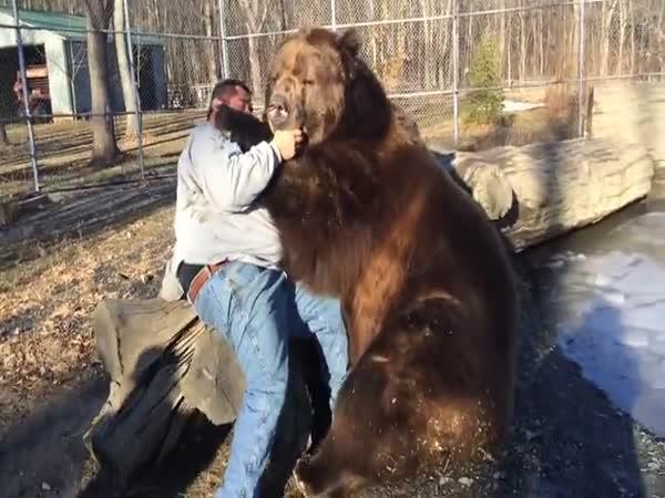 Medvědí láska