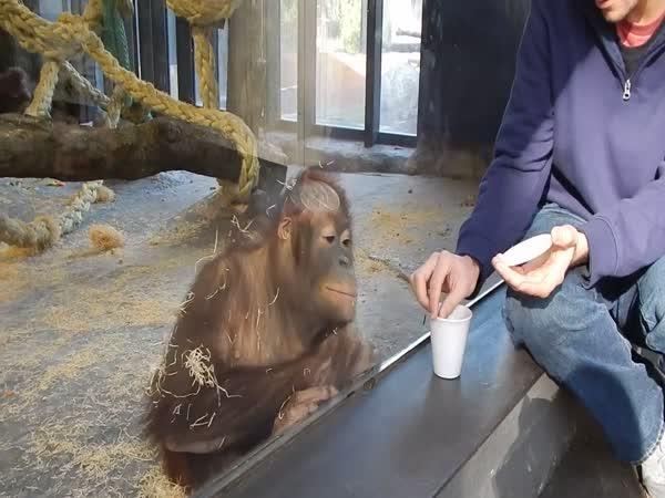 Orangutan a kouzlo