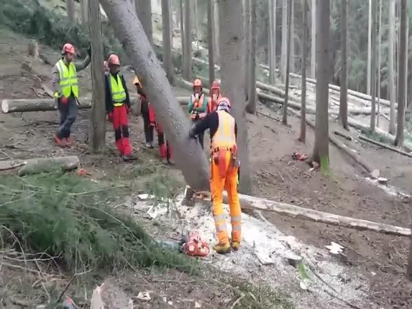Kácení stromu smykem