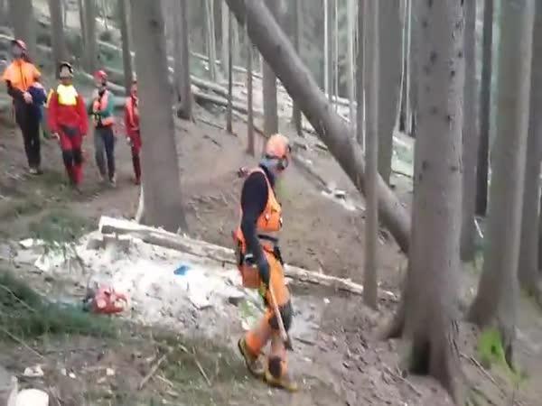 Zkušený dřevorubec