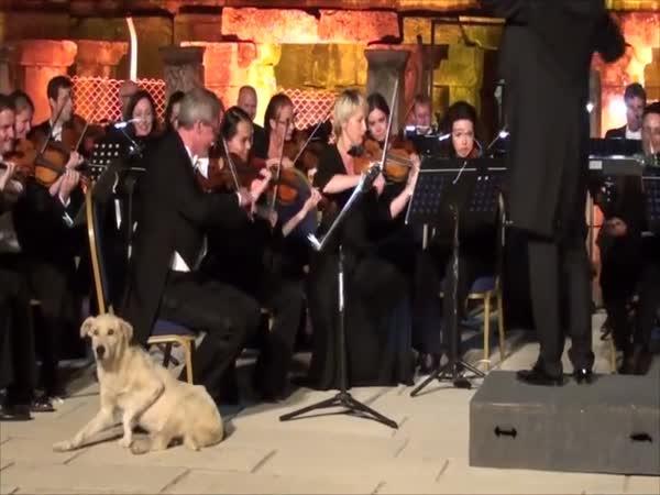 Pes má rád klasickou hudbu