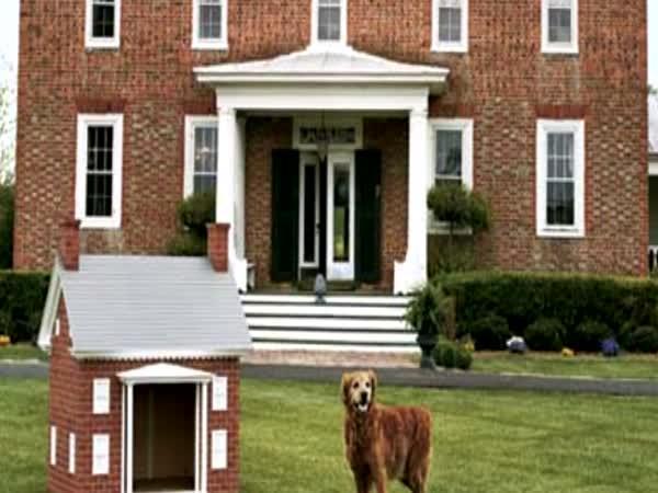 TOP 5 - Nejluxusnější psí domy