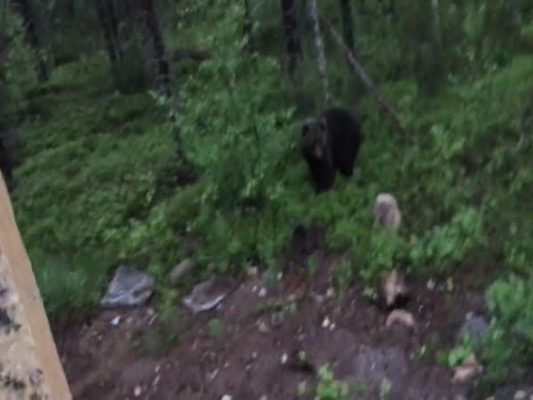 Jak odehnat medvěda