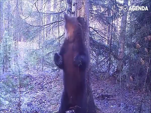 Idylka v ruském lese