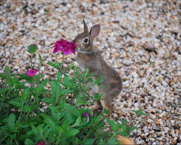 GALERIE - Zvířata obdivující vůni květin 2
