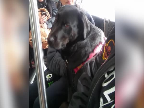 Pes jezdí denně autobusem do parku