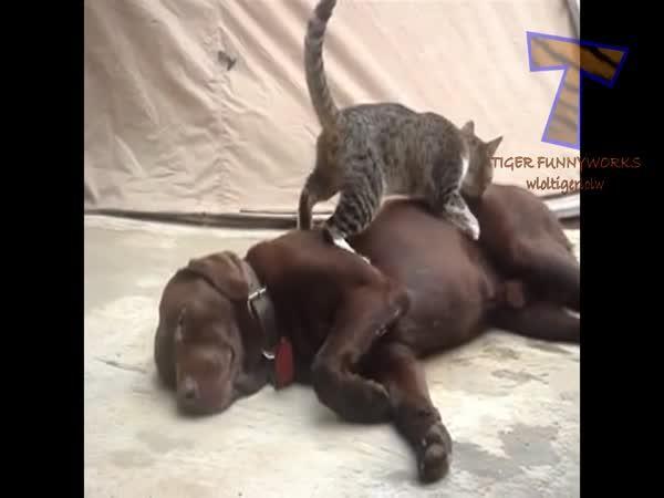 Kočky vs. psi