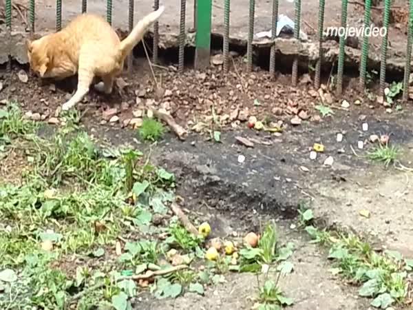 Vetřelec v zoo