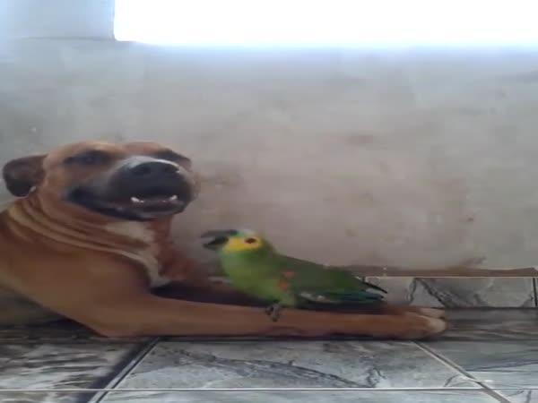 Přátelství psa a papouška