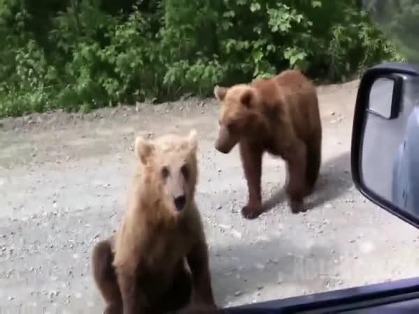 Rusové vs medvědi