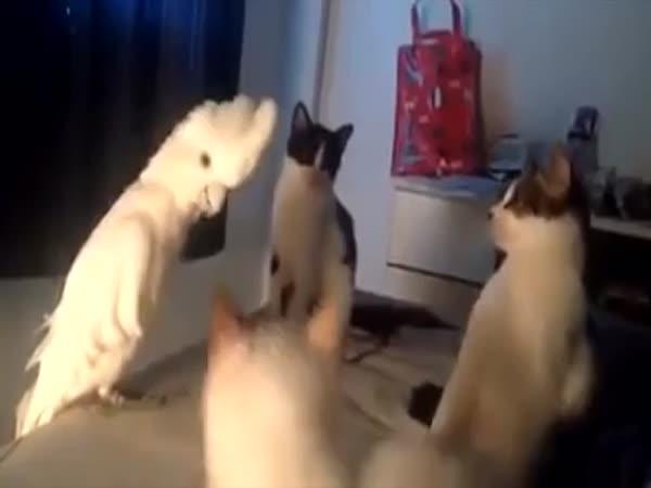 Nejsem kočka, ale alespoň je zmatu!